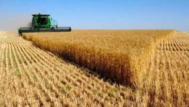 Photo of Tarımsal Destek Kredisi Veren Bankalar